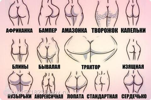 Классификация женских попок